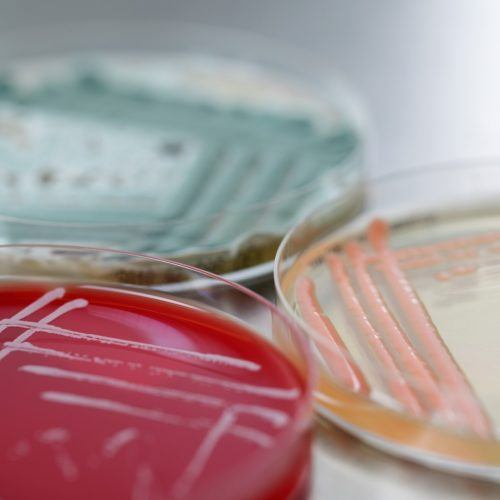 BaseClear Microbiology services