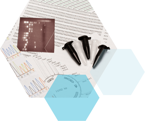 Sanger sequencing with BaseClear visuals