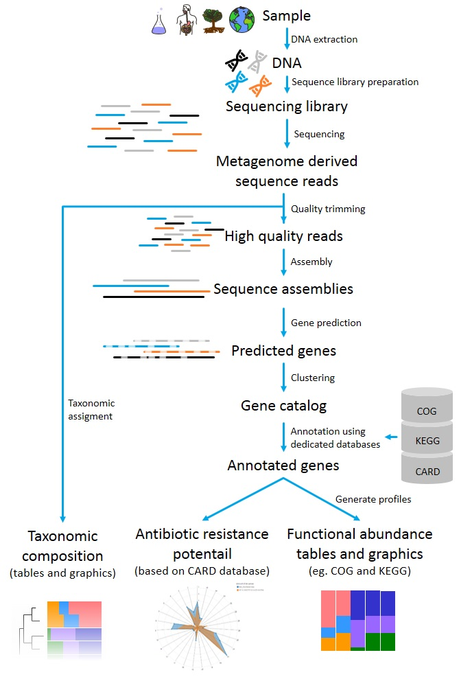 Flow chart of the metagenomics analysis pipeline from BaseClear
