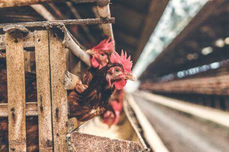 Webinar Animal Microbiome